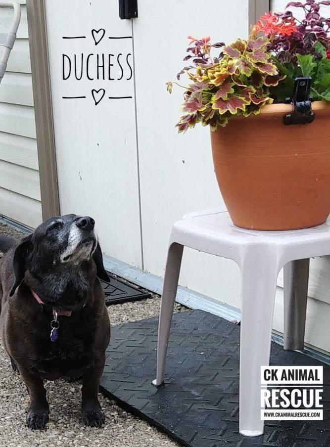 Duchess aka Mama