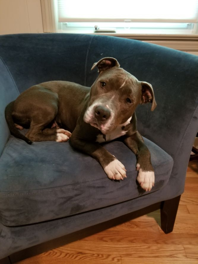 Tilly - Adoption Pending