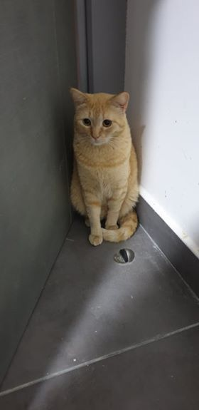 Simba is a kitty who really hopes to find his new family here in the USA Simba like his siblings