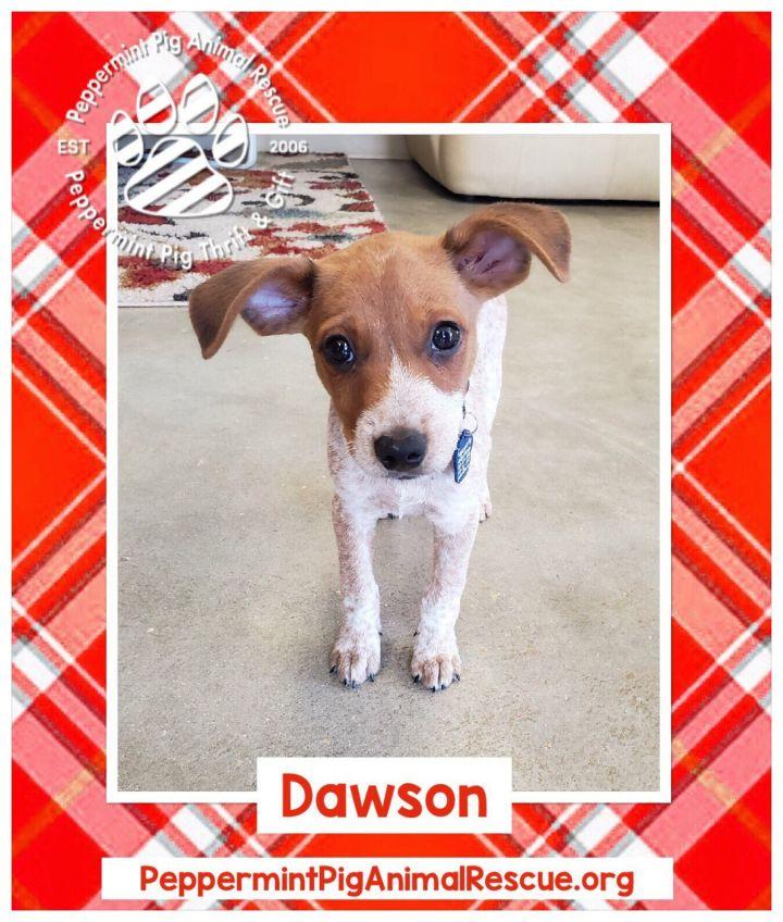 Dawson 3