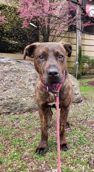 Dog for adoption - Ronnie, a Mixed Breed in Rochester, NY