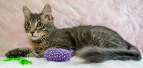 Clive, an adoptable Domestic Medium Hair Mix in Oakland, CA