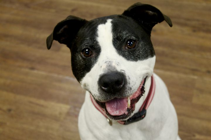Olive, an adoptable Terrier Mix in Lake Odessa, MI