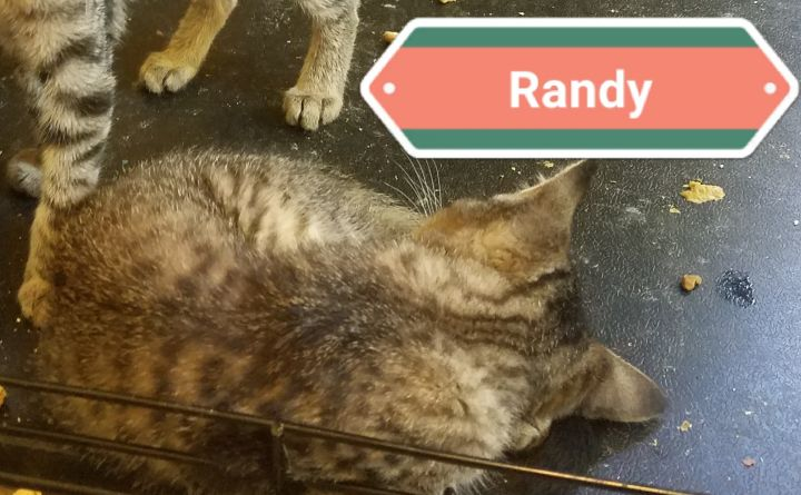 Randy 1