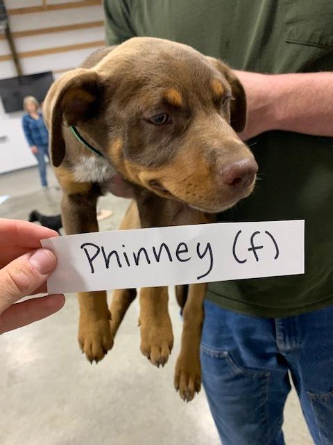 Phinney 5