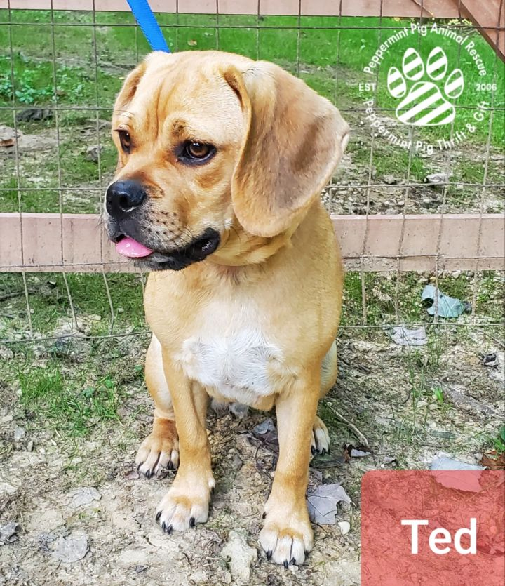 Ted ADOPTION PENDING 2