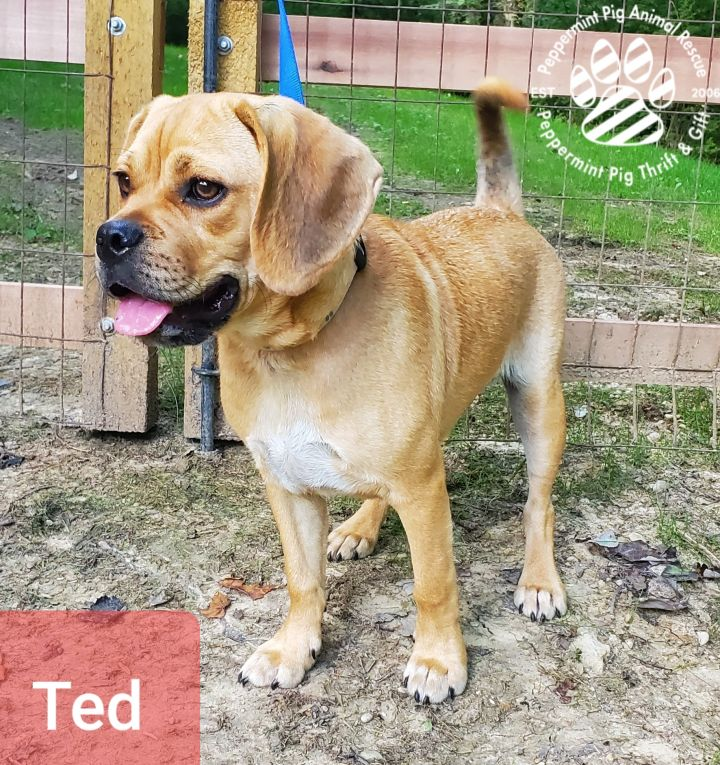Ted ADOPTION PENDING 3