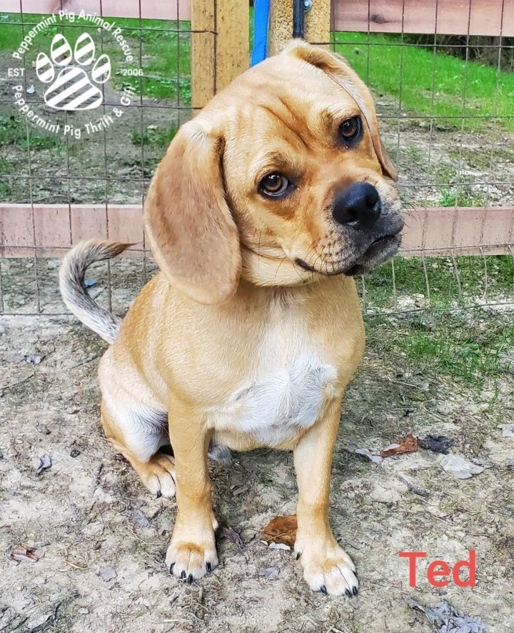 Ted ADOPTION PENDING 4