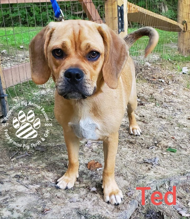 Ted ADOPTION PENDING 5