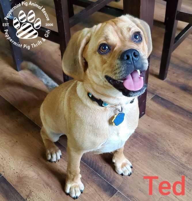 Ted ADOPTION PENDING