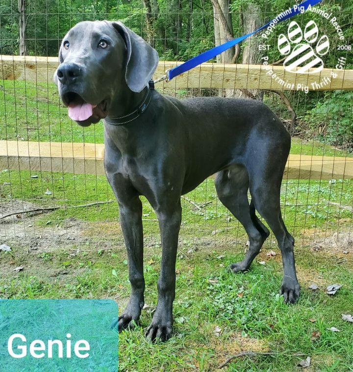Genie ADOPTION PENDING 2