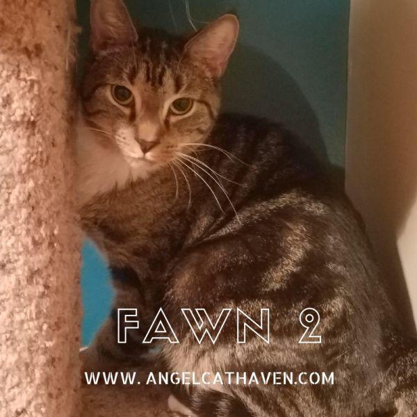 Fawn 2