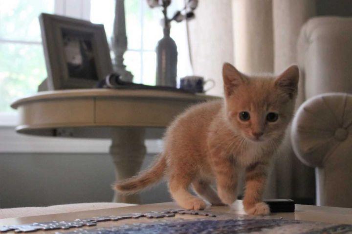 Baxter 3