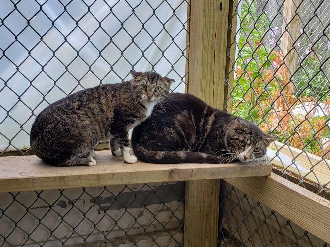 Naomy (Barn Cat)