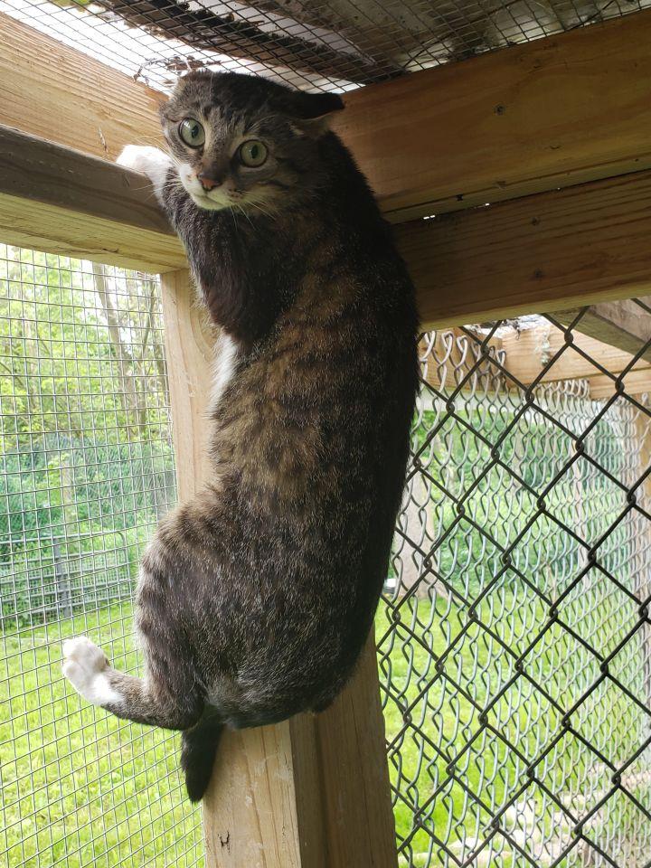Naomy (Barn Cat) 2