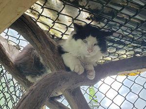 Nio (Barn Cat)