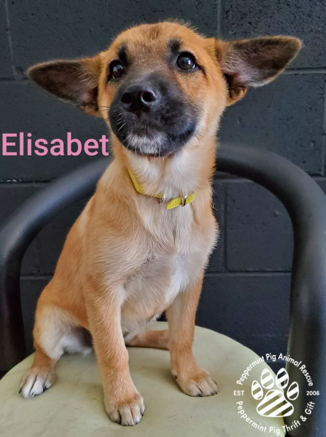 Elisabet ADOPTION PENDING