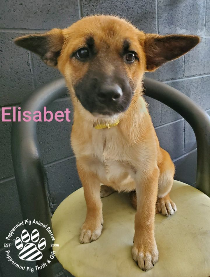 Elisabet ADOPTION PENDING 2