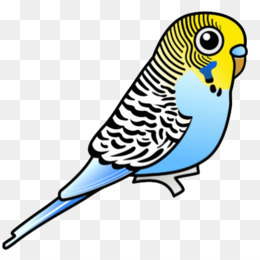 Parakeet for adoption - Annie and Jane, a Parakeet (Other) in