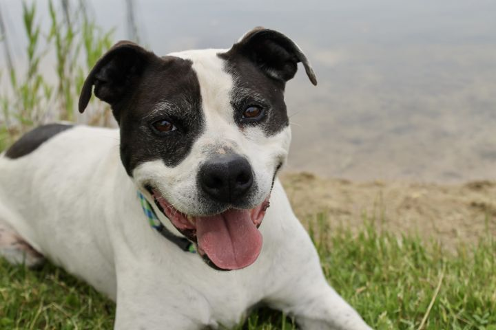 Ace, an adoptable Terrier Mix in Lake Odessa, MI