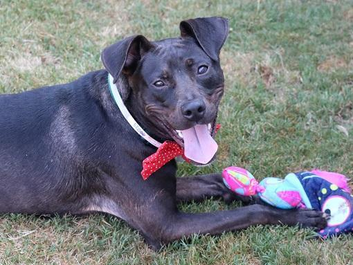 Dax, an adoptable Mixed Breed in Athens, GA