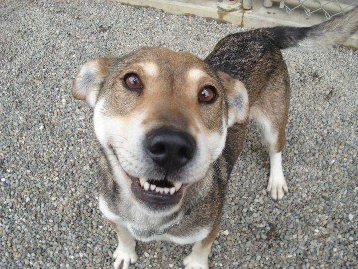 Dog for adoption - Emma, a Husky & Shar-Pei Mix in Falls
