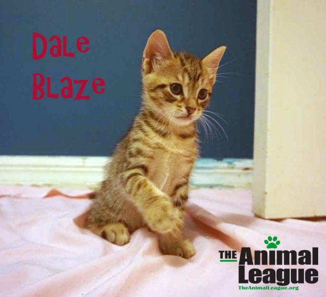 Dale Blaze