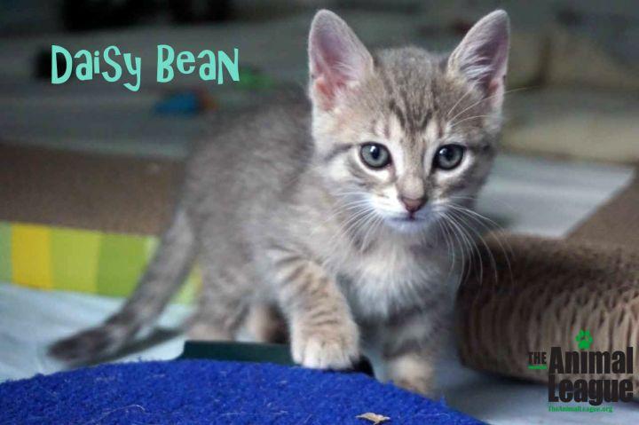 Daisy Bean 1