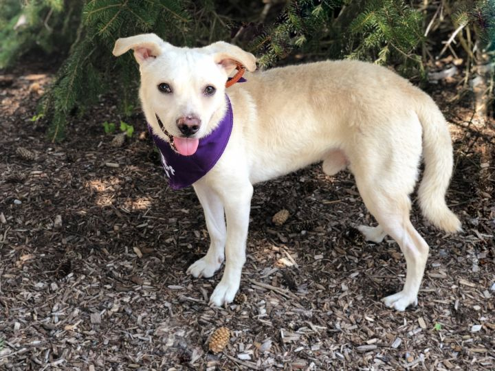 Jerry-Adopted!, an adopted Terrier Mix in Detroit, MI