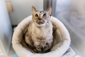 My name is Muffin and sometimes I get a bit scared Im looking for a friendly human who will get