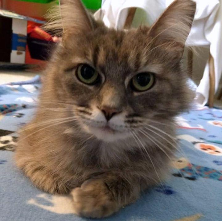 Fiona (Fifi) 1