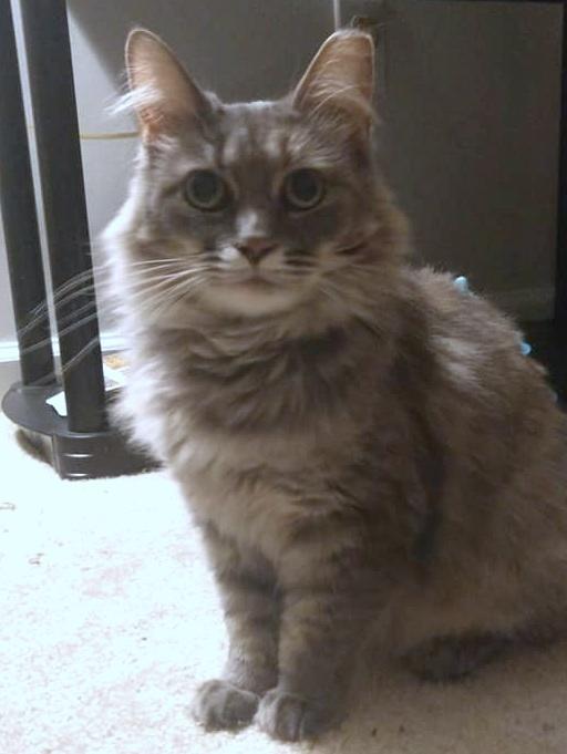 Fiona (Fifi) 2