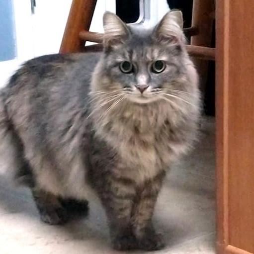 Fiona (Fifi) 5