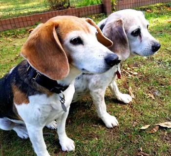 Stella & Maggie