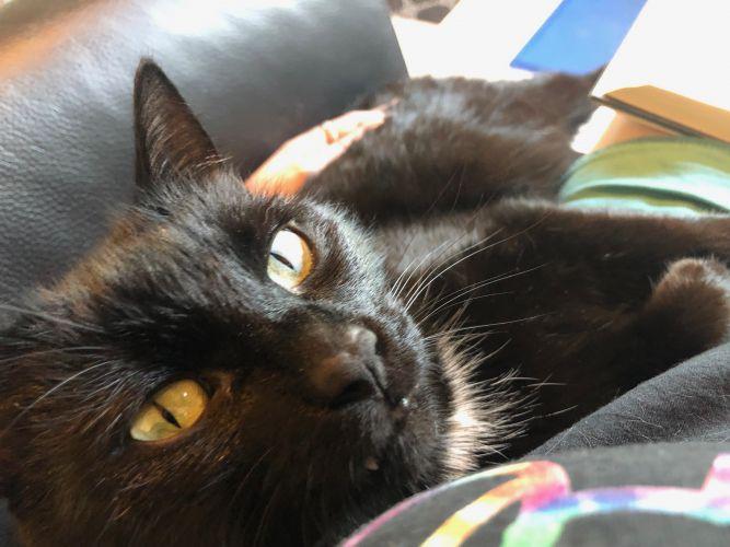 Blackie - Best Brother!