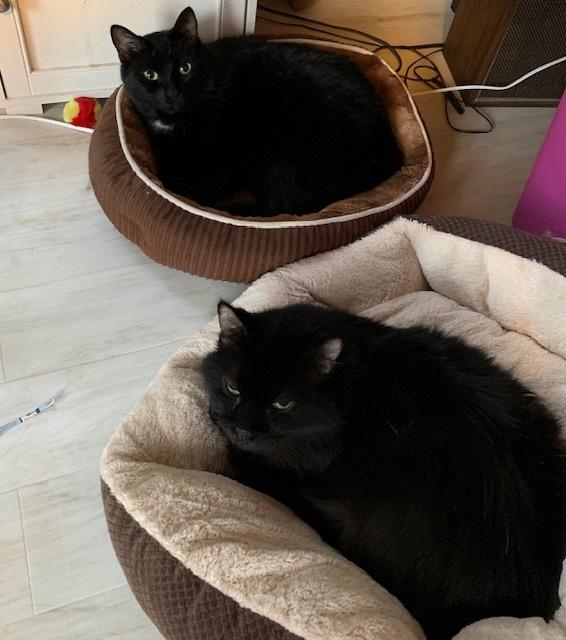 Blackie - Best Brother! 3