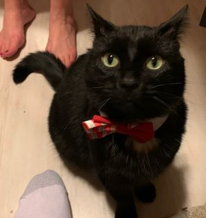 Blackie - Playful and Loving!