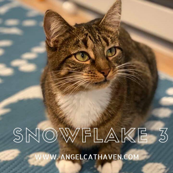 Snowflake 3 1