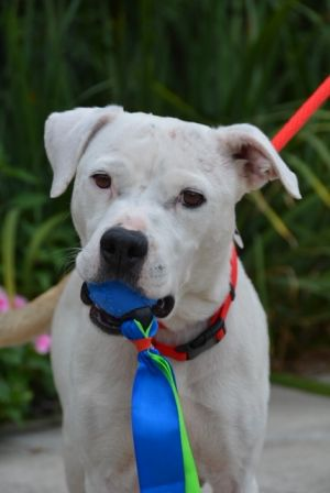 This is Dazee LOVES LOVES LOVES toys In fact her love of toys saved her life Dazee was found as