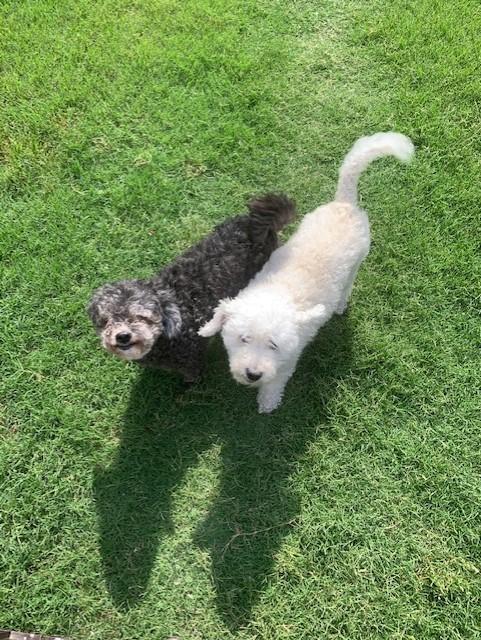 Lucy & Daisy [Pr]