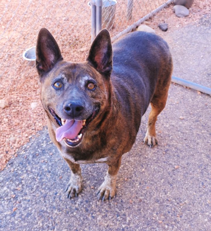 Missy, an adopted Cattle Dog Mix in Washington, UT