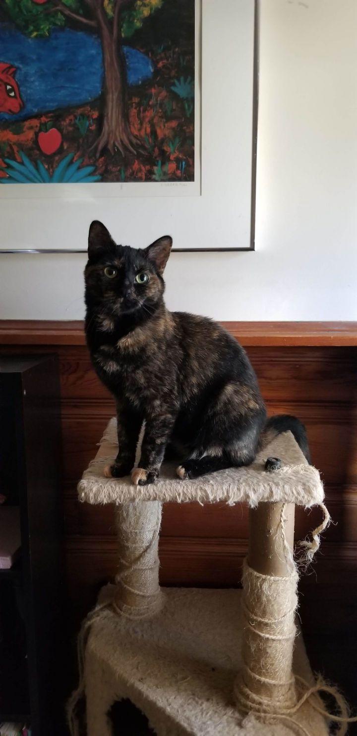 Frida 3
