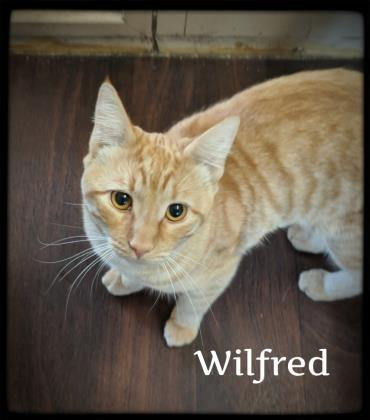 Wilfred 1