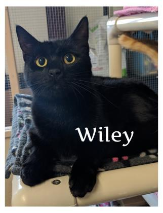 Wiley 1