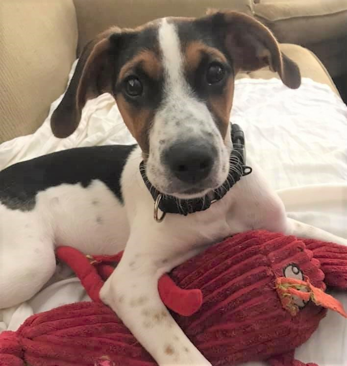 Elliott *HERE IN NH*, an adoptable Mixed Breed in Northwood, NH