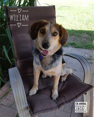 William - Pending