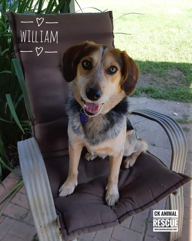 William - Pending 1