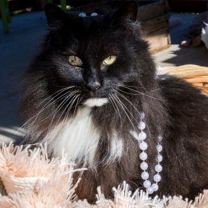 Miss Puss