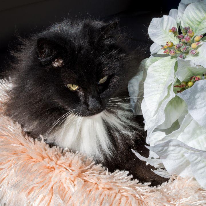 Miss Puss 4