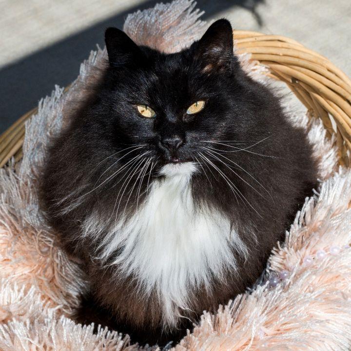 Miss Puss 1